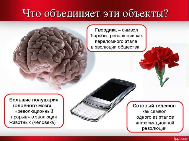 Что объединяет эти объекты? Большие полушария головного мозга – «революционны...