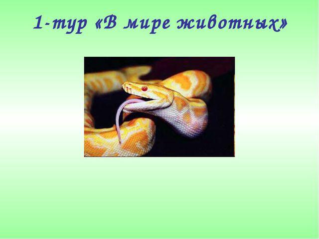 1-тур «В мире животных»