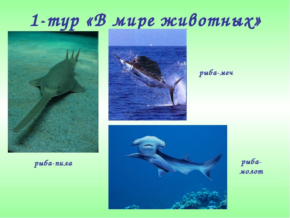1-тур «В мире животных» рыба-пила рыба-меч рыба-молот