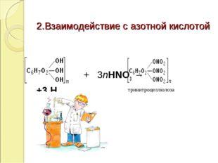 2.Взаимодействие с азотной кислотой   + 3nHNO3→ +3H2О тринитроцеллюлоза