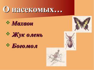 О насекомых… Махаон Жук олень Богомол