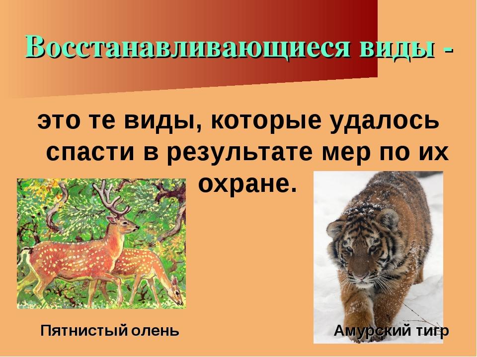 Восстанавливающиеся виды - это те виды, которые удалось спасти в результате м...