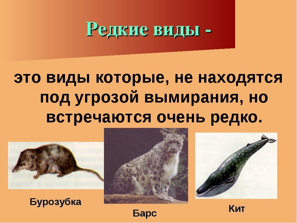 Редкие виды - это виды которые, не находятся под угрозой вымирания, но встреч...