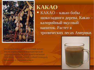 КАКАО КАКАО – какао-бобы шоколадного дерева. Какао – калорийный вкусный напит