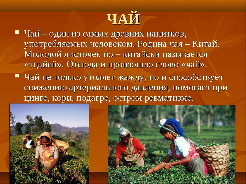 ЧАЙ Чай – один из самых древних напитков, употребляемых человеком. Родина чая...