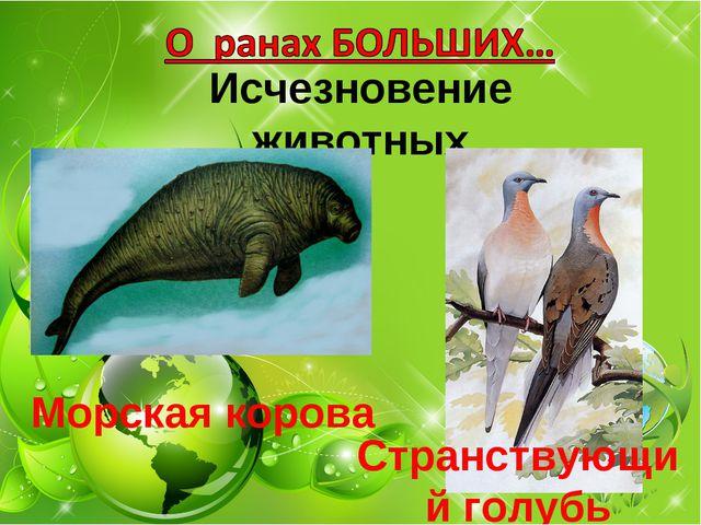 Исчезновение животных Морская корова Странствующий голубь