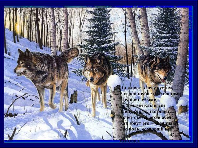 Он живет в лесу густом, В серой шубке и с хвостом, Щелкает зубами, с острыми...