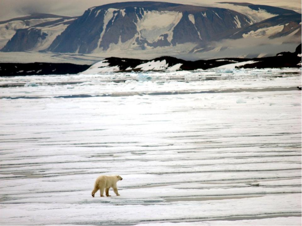 полпути лодка картинки арктических заповедников настоящие