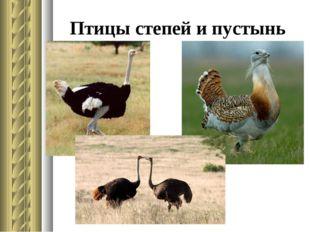 Птицы степей и пустынь