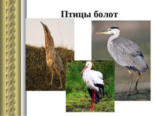 Птицы болот