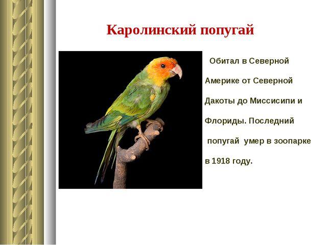 Каролинский попугай Обитал в Северной Америке от Северной Дакоты до Миссисипи...