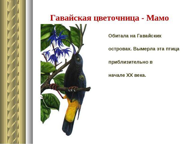 Гавайская цветочница - Мамо Обитала на Гавайских островах. Вымерла эта птица...