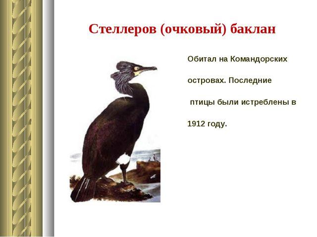 Стеллеров (очковый) баклан Обитал на Командорских островах. Последние птицы б...