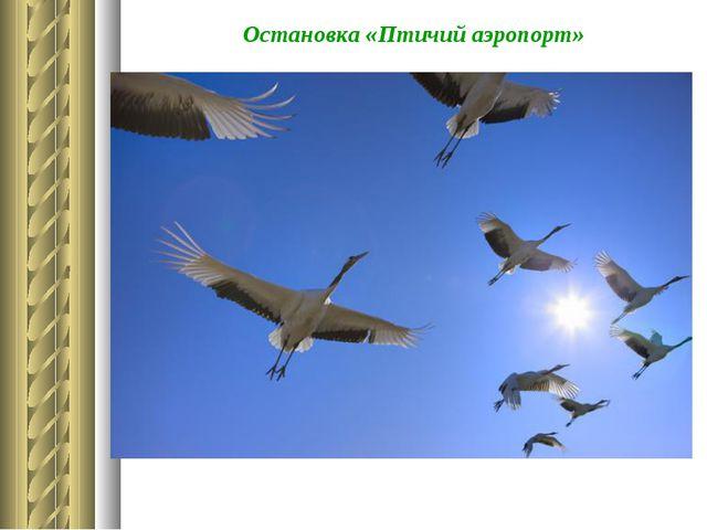 Остановка «Птичий аэропорт»