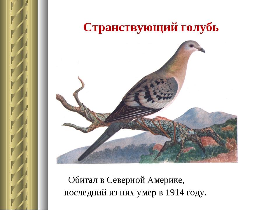 Странствующий голубь Обитал в Северной Америке, последний из них умер в 1914...