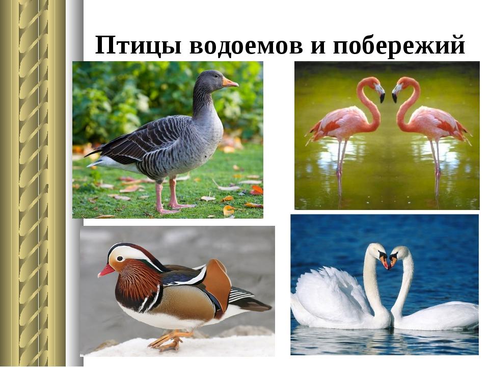 Птицы водоемов и побережий
