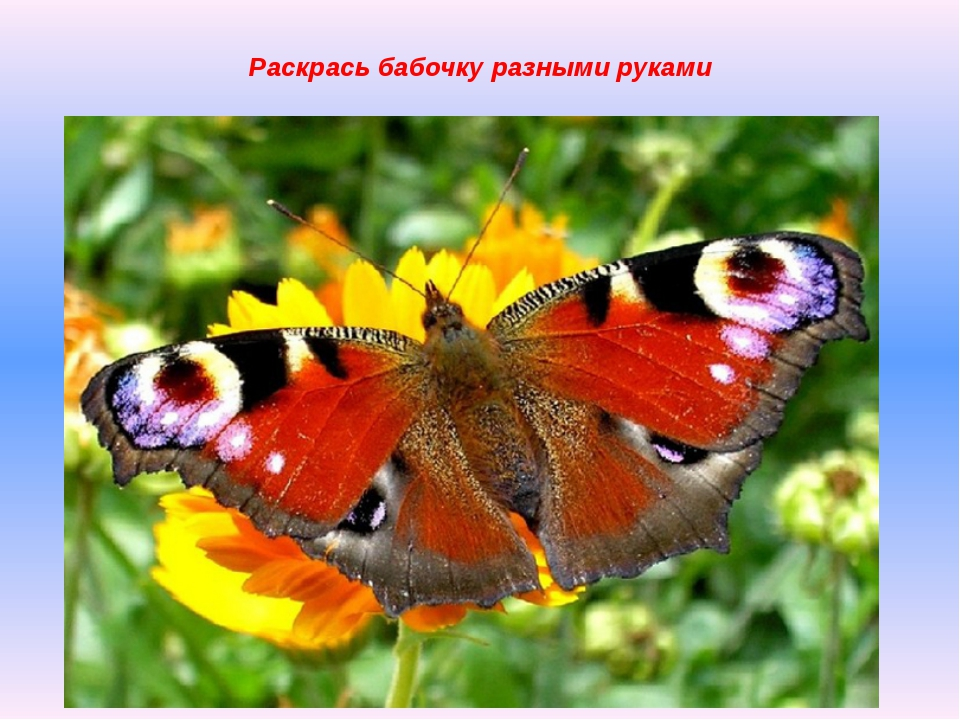 Раскрась бабочку разными руками