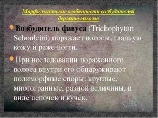 Возбудитель фавуса (Trichophyton Schonleini) поражает волосы, гладкую кожу и
