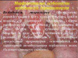Возбудитель микроспории (Microsporum) поражает гладкую кожу, волосистую часть