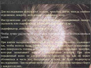 Для исследования используют волосы, чешуйки, ногти, иногда гнойное отделяемое
