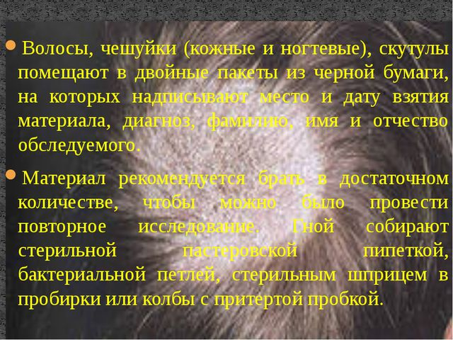 Волосы, чешуйки (кожные и ногтевые), скутулы помещают в двойные пакеты из чер...