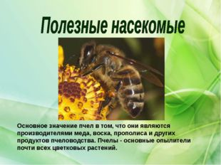 Основное значение пчел в том, что они являются производителями меда, воска, п