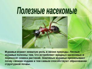 Муравьи играют немалую роль в жизни природы. Лесные муравьи полезны тем, что