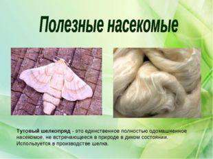 Тутовыйшелкопряд- это единственное полностью одомашненное насекомое, не вст