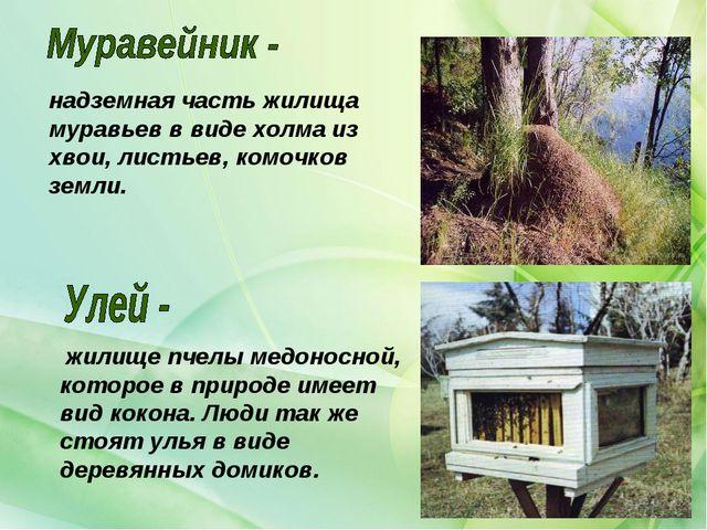 жилище пчелы медоносной, которое в природе имеет вид кокона. Люди так же сто...