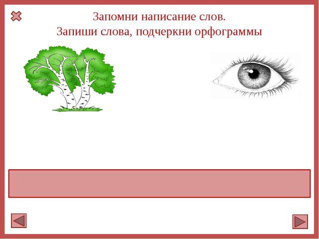 Запомни написание слов. Запиши слова, подчеркни орфограммы берёзка глаз