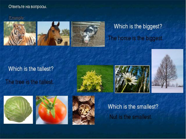 Ответьте на вопросы. Example: Which is the biggest? The horse is the biggest....
