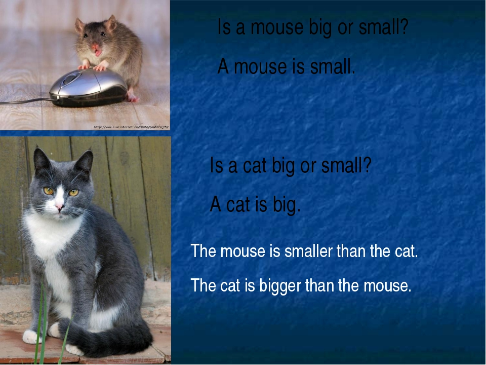 Is a mouse big or small? A mouse is small. Is a cat big or small? A cat is bi...
