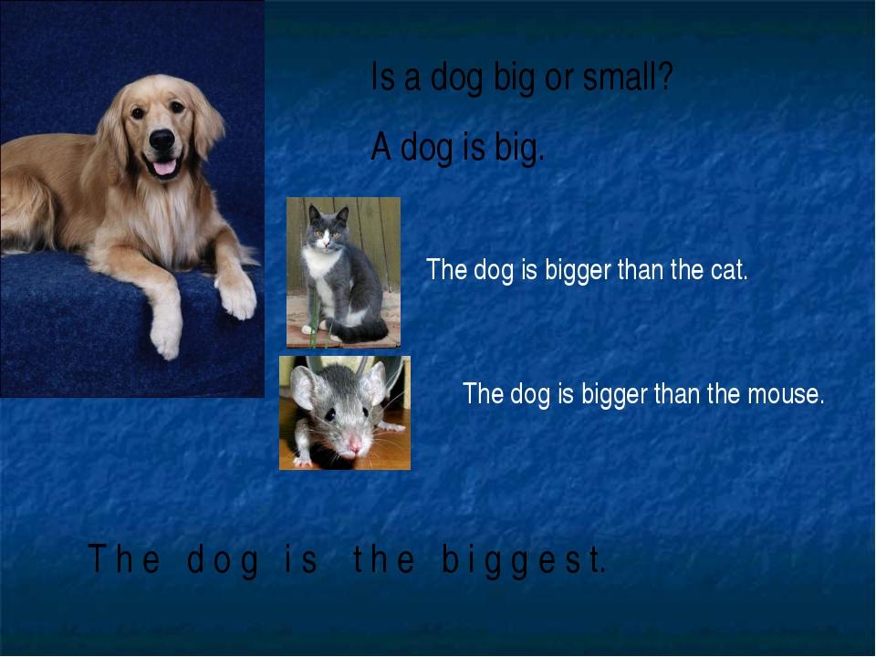 Is a dog big or small? A dog is big. T h e d o g i s t h e b i g g e s t. The...