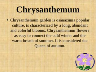 Chrysanthemum Chrysanthemum garden is osanazuma popular culture, is character
