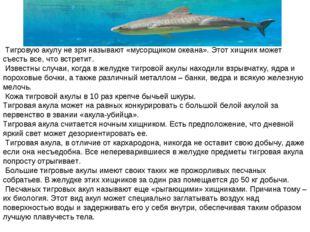 Тигровую акулу не зря называют «мусорщиком океана». Этот хищник может съесть