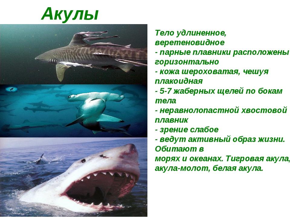 Акулы Тело удлиненное, веретеновидное - парные плавники расположены горизонт...