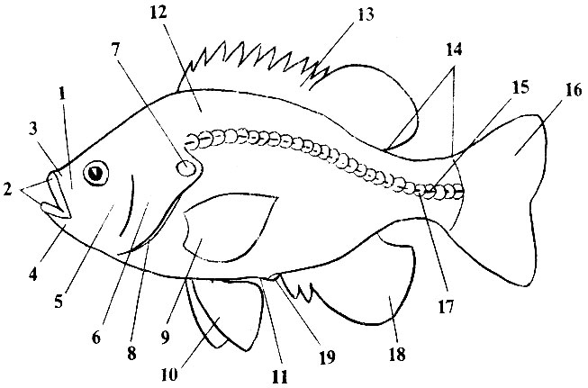 http://aquariumlib.ru/books/item/f00/s00/z0000019/pic/000047.jpg
