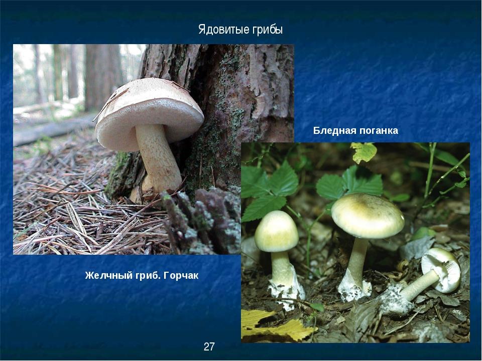 Желчный гриб. Горчак Ядовитые грибы Бледная поганка 27