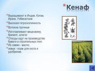 Выращивают в Индии, Китае, Иране, Узбекистане Высокая гигроскопичность Волокн