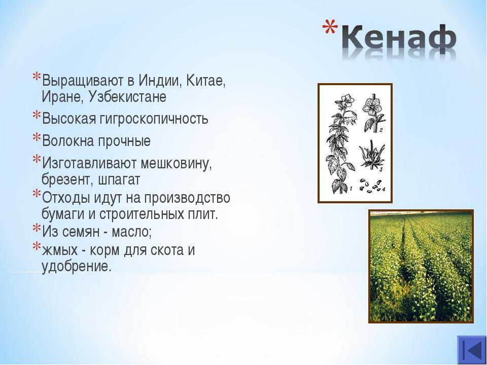 Выращивают в Индии, Китае, Иране, Узбекистане Высокая гигроскопичность Волокн...