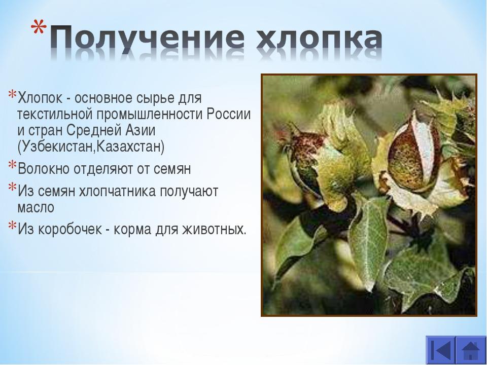 Хлопок - основное сырье для текстильной промышленности России и стран Средней...