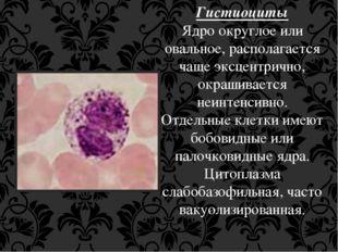 Гистиоциты Ядро округлое или овальное, располагается чаще эксцентрично, окраш