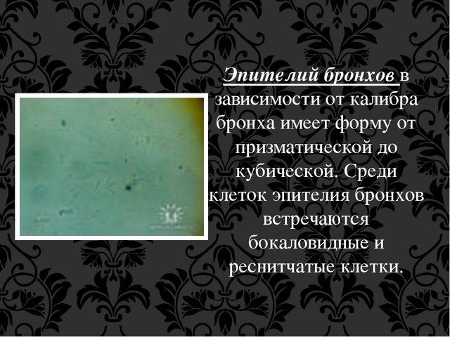 Эпителий бронхов в зависимости от калибра бронха имеет форму от призматическо...