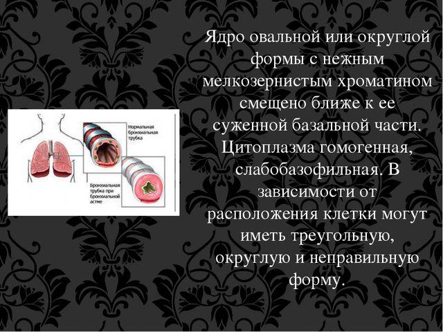 Ядро овальной или округлой формы с нежным мелкозернистым хроматином смещено б...