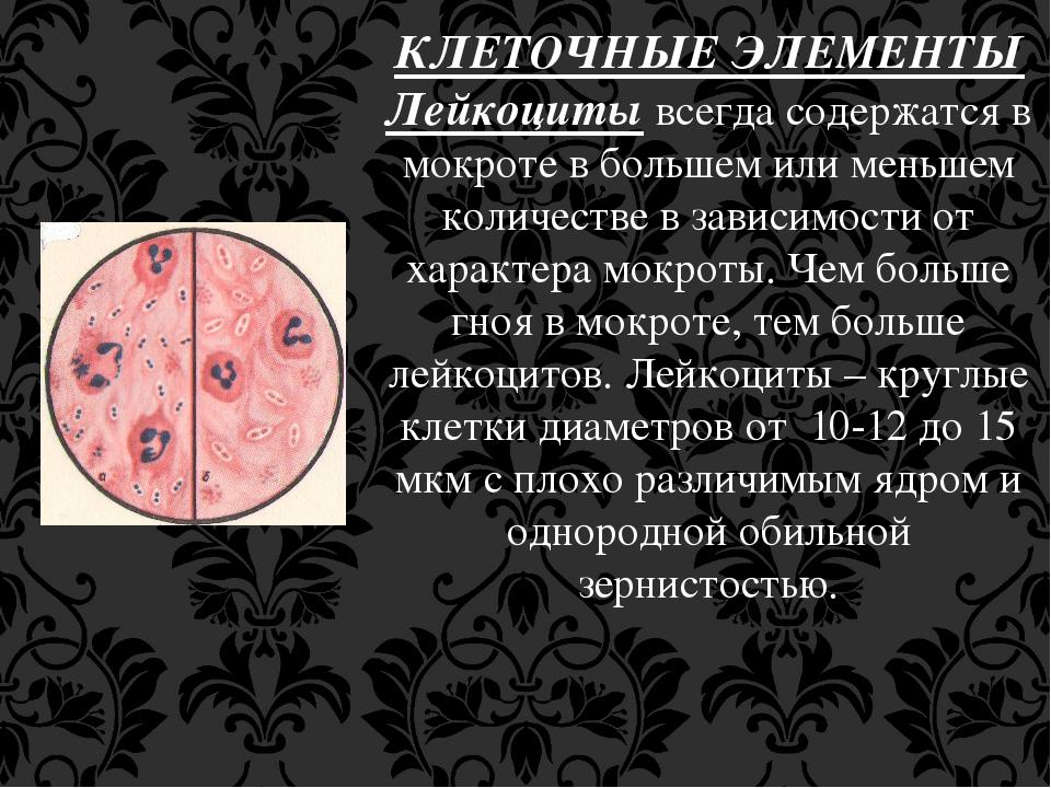 КЛЕТОЧНЫЕ ЭЛЕМЕНТЫ Лейкоциты всегда содержатся в мокроте в большем или меньше...
