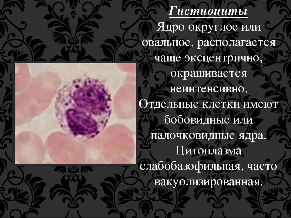 Гистиоциты Ядро округлое или овальное, располагается чаще эксцентрично, окраш...