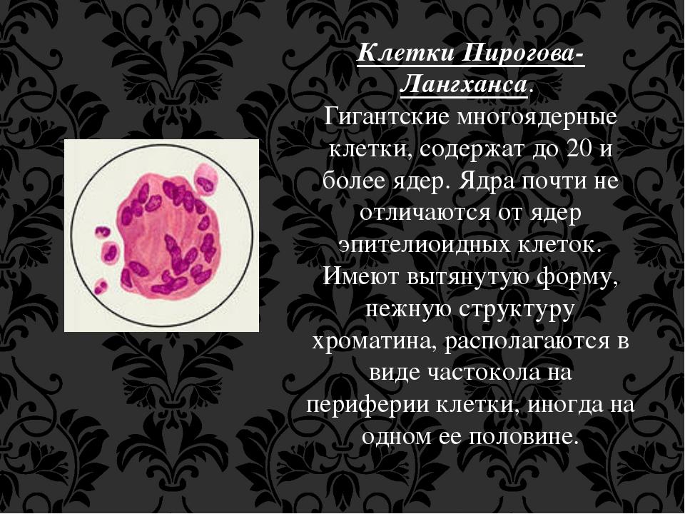 Клетки Пирогова-Лангханса. Гигантские многоядерные клетки, содержат до 20 и б...