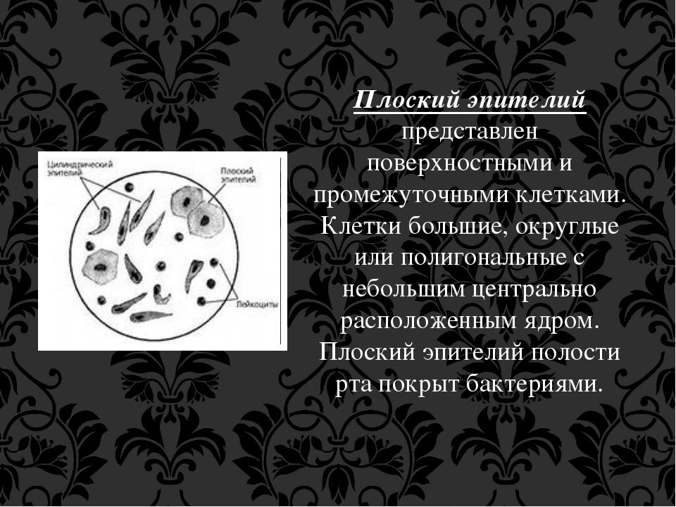 Плоский эпителий представлен поверхностными и промежуточными клетками. Клетки...