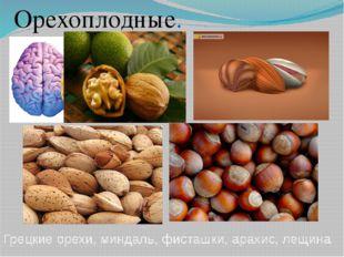 Грецкие орехи, миндаль, фисташки, арахис, лещина Орехоплодные.