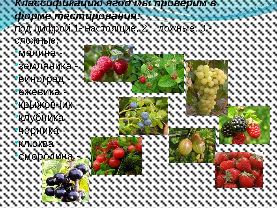Классификацию ягод мы проверим в форме тестирования: под цифрой 1- настоящие,...
